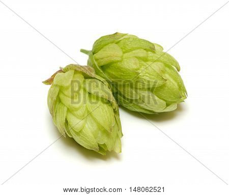 Hop cone isolated on the white background
