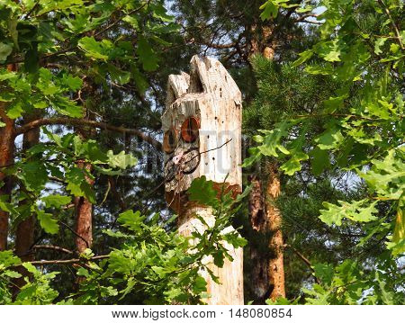 Wooden idol in woods. Totem cat. Wooden cat. Wooden sculpture in the forest undergrowth.