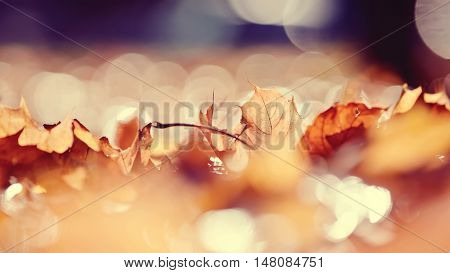 Abstract autumn background from the fallen maple leaves. Golden autumn.
