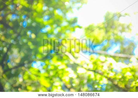 Abstract Green Rainforests Background Color In Selective Focus.