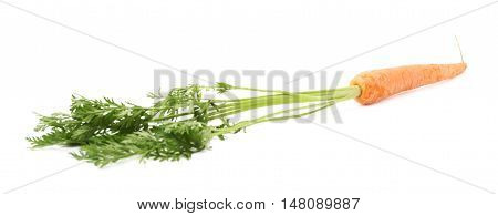 Unpeeled carrot with the green top isolated over white background