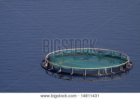 Tuna cage