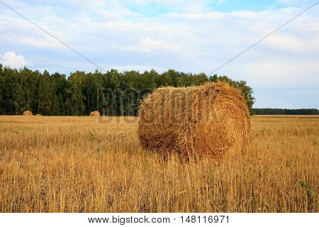 Harvested Field With Hay Bales