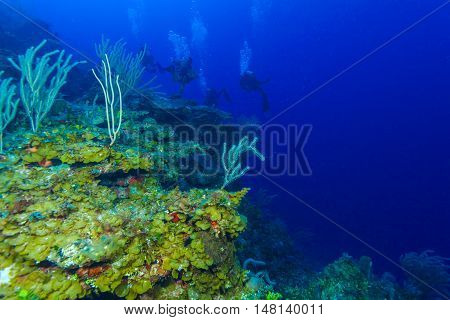 Colorfull Reef And Group Of Divers, Cayo Largo