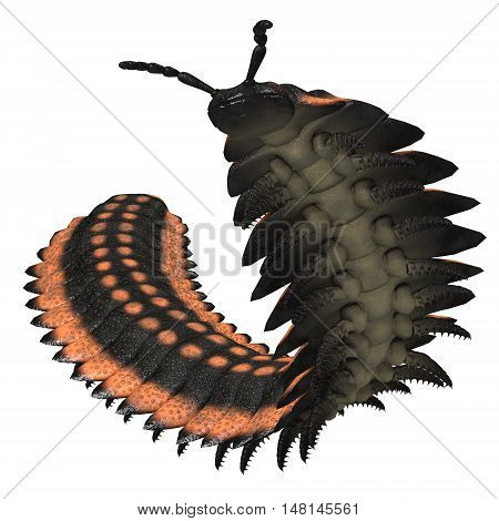 Arthropleura on White 3D Illustration - Arthropleura was a giant insect invertebrate that lived in North America and Scotland during the Carboniferous Period.