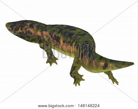 Dendrerpeton Amphibian Tail 3D Illustration - Dendrerpeton was an extinct genus of amphibious carnivore from the Carboniferous Period of Canada.