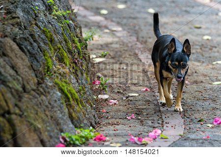 Dog In Costa Rica