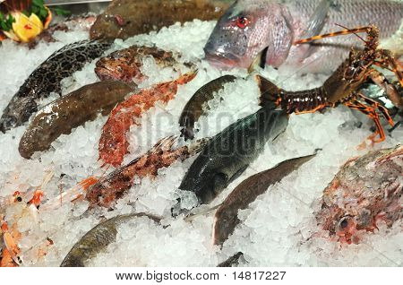 frozen sea fresh fish in ice