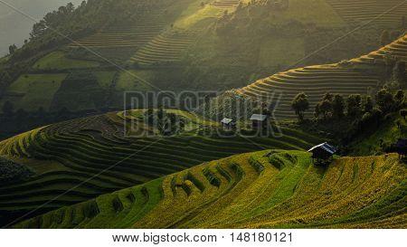 Rice fields on terraced of Mu Cang Chai YenBai Vietnam