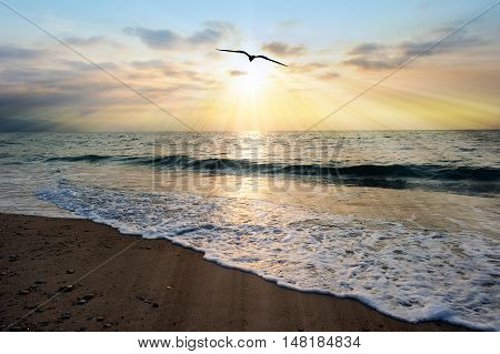 Sunset ocean bird is an ethereal ocean scenic with sun rays bursting forth from the setting sun as a gentle wave comes to shore.