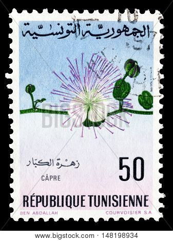 TUNISIA - CIRCA 1968 : Cancelled postage stamp printed by Tunisia, that shows Caper.