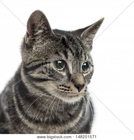 Close-up of European Shorthair kitten, 3 months old, Looking away from camera, isolated on white
