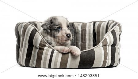 Young crossbreed puppy sleeping in a crib isolated on white