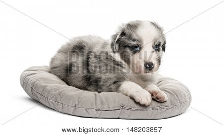 Young crossbreed puppy lying down in a crib isolated on white