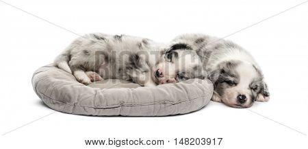 Two young crossbreed puppy sleeping in a crib isolated on white
