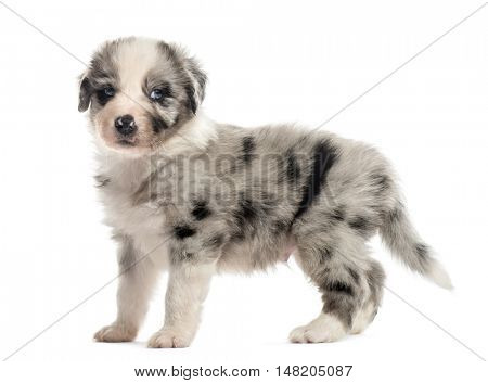 Side view of a 21 days old crossbreed puppy isolated on white