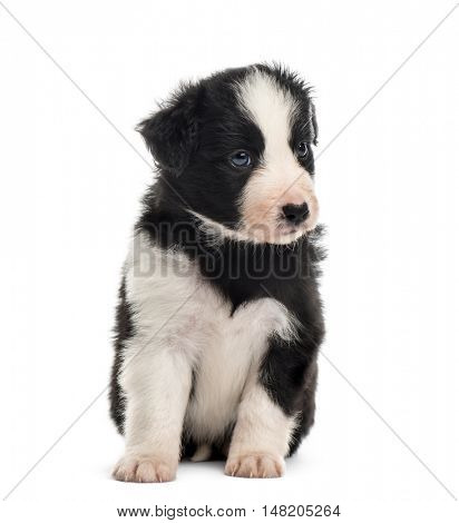 Front view of a 21 days old crossbreed puppy sitting isolated on white