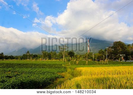 Landscape Sunny Mountain with padi field, Ciremai mountain landscape, the picture is taken from a paddy field of location Linggarjati Kuningan, West Java. Date: 23 Agusutus 2016