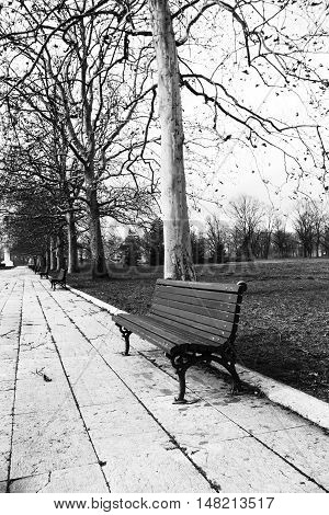 Benches in the beautiful park lined up