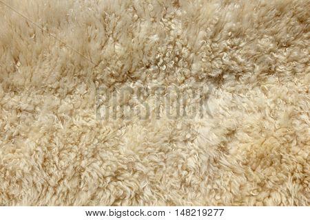 Close up of cream animal sheep fur
