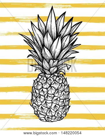 Hand Drawn Vector Illustration - Pineapple With Striped Background. Exotic Tropical Fruit. Sketch. O