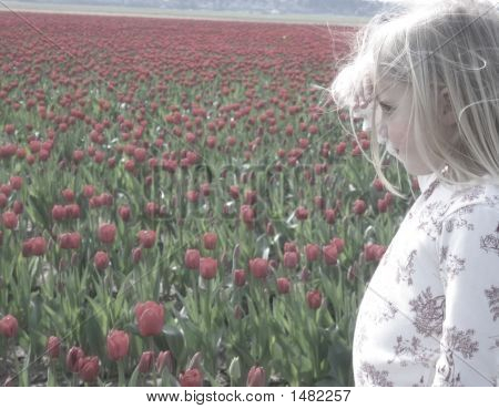 Looking At Tulips