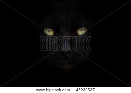 The eye of black cat on street with black background