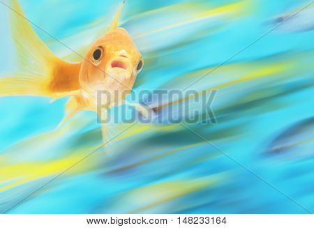 Gold fish with school of fish in motion in background, digital composite