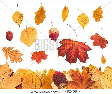 Falling Yellow Leaves And Leaf Litter Below