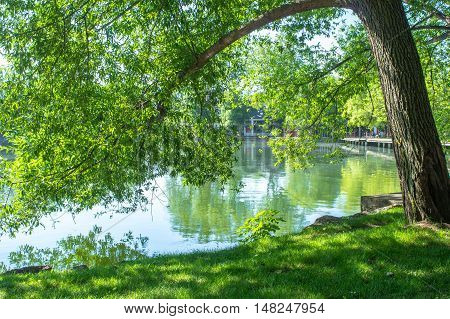 Green tree branches over the lake in the mountains, Puigcerda, Girona, Catalonia, Spain