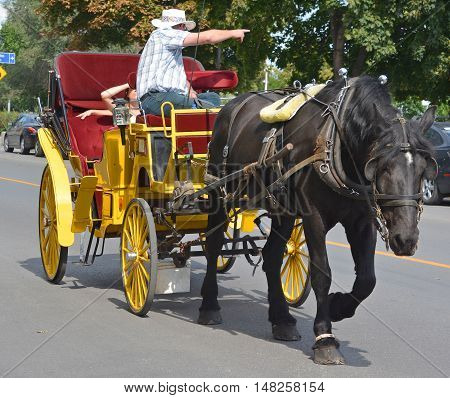 MONTREAL QUEBEC CANADA 09 15 2016: Horse drawn buggy in the heart of the Old Montreal. Montreal is the largest city in the province, the second-largest in the country.