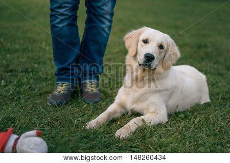 Lwhite Labrador Retriever Lying On Grass Near The Feet Of The Master
