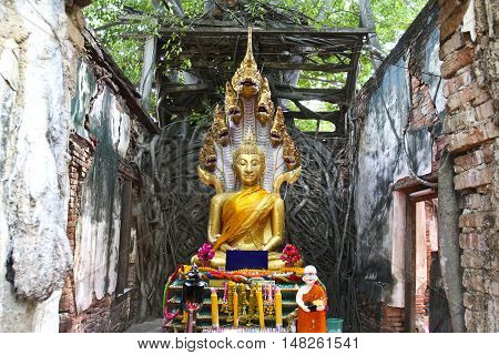Unseen Thailand, Ruins of old temple with a Bodhi tree root Sang Katea temple Sala Daeng Muang Angthong Thailand (Public property)