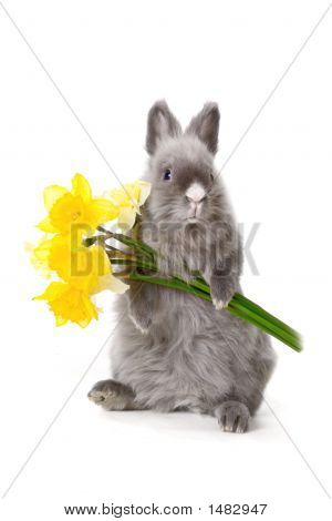 Bunny With Yellow Flowers..