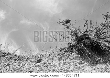 Eroded Tree And Crumbling Beach Front
