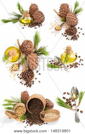 Set of cedar products:oil cones and nuts decorated with branch of cedar tree isolated on white background.