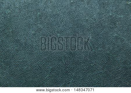 Antillean manatee (Trichechus manatus manatus). Skin texture. Wildlife animal.