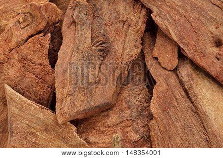 Organic barks of Arjuna or Arjun Tree (Terminalia arjuna) Macro close up background texture.Top view.