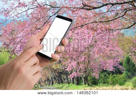 human hand hold smartphone tablet cell phone with blank screen on blurry colorful nature background.
