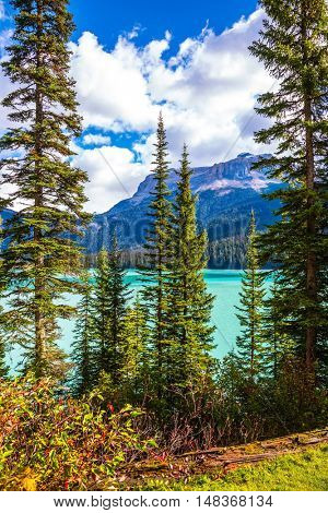 The emerald-green lake surrounded by a pine forest. Emerald Lake in the Canadian Rockies