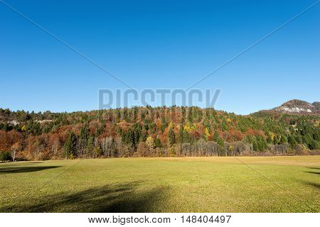 Autumnal forest with pines beeches and firs green lawn and clear blue sky. Val di Sella (Sella Valley) Borgo Valsugana Trento Italy