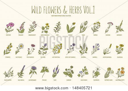 Wild flowers and herbs hand drawn set. Volume 1. Botany. Vintage flowers. Vector illustration in the style of engravings.
