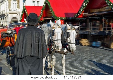 Coachman in a black hat and coat and white horses hitched to horse carriage waiting for tourists on Christmas Old Town Square of Prague, Czech Republic.