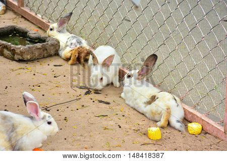 The cutie rabbit with nature in farm