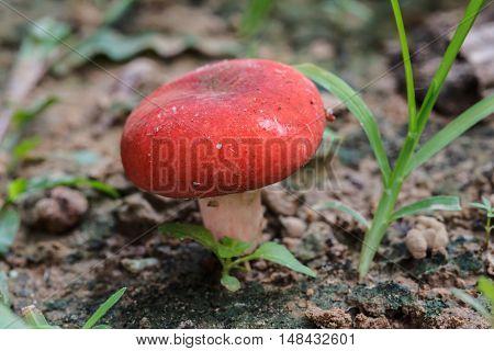The Edible mushrooms in natural color beautiful
