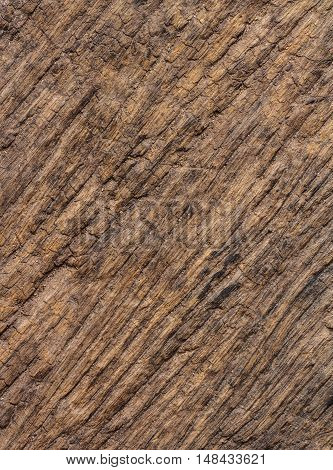 The Close -up Old wooden surface in nature