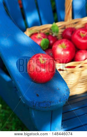 A basket of freshly picked Honey crisp apples sitting on an outdoor Adirondack chair.