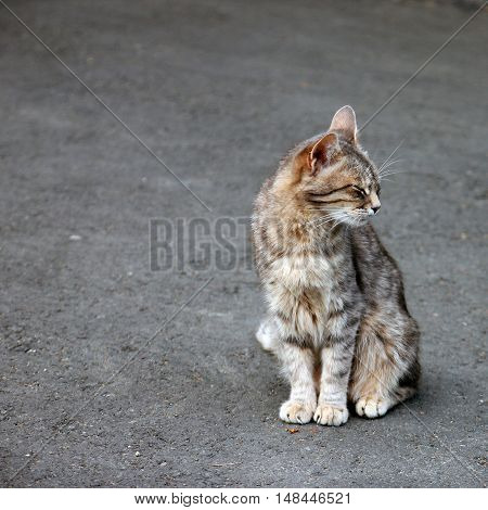 a lone grey tabby cat sitting on the pavement and squinting from pleasure
