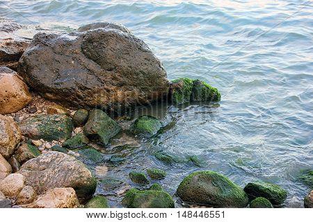 beautiful picturesque wild Black sea coast with boulders and rocks with green ooze in sea water