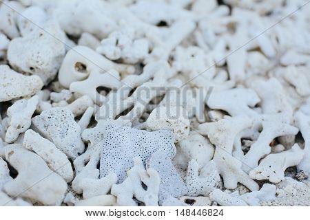 White Coral Beach Background Texture